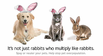 Spay and Neuter Advert